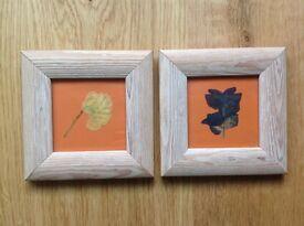 2 x Framed Pressed Pansies in Limed Wood Frames