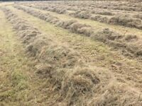Meadow hay bales