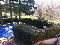 GARDEN MAINTENANCE,HEDGES, GARDEN MAKE OVERS , WINTER TIDY UP'S,