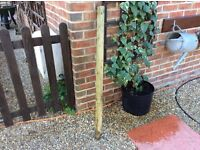 Wooden round posts 1200mm x 75mm/4 ft x 3ins