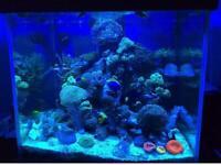 600 Litre 3ftx3ftx2.5ft Aquarium