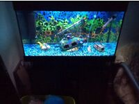 (Bargain) 2 125/litre 4 months old fish tanks all accesses