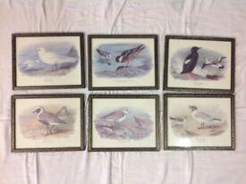 Set of 6 bird pictures