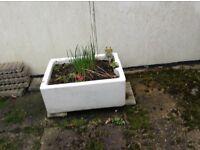 Belfast Sink used as herb garden