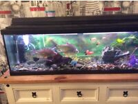 Fish tank with fish and air pump heather and filter