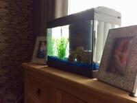 Fish tank £20