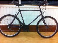 """Men's Mountainbike - fully refurbished 21"""" Raleigh Nexus, 26"""" wheels, 18-speed, hard tail"""