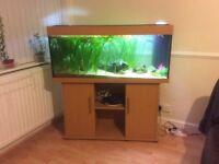 Juwel Rio 240 L fish tank set up