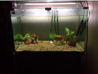 Tropical Fish Tank with Stand