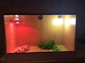Bearded dragon with Setup £150 Deliver Available