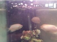 Free tropical fish (sold)