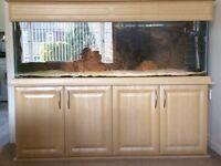 5 foot fish tank Seashell Elite in light oak cabinet inc filters, lighting, heater