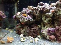 Maidenhead Aquatics Solid Oak Cube Fish Tank