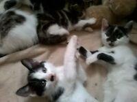 6 lovely natured kittens boys and girls