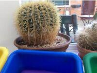 Cactus..large and medium in pots