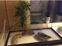 Exo terrarium/ vivarium new condition a month old