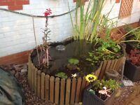 Free standing garden pond