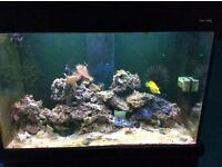 Aqua reef 300 saltwater tank