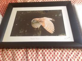 A framed photo of barn owl in flight signed by local photographer Hazlett