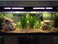 Fish Tank, Stand, Filters and Heater
