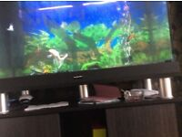 12 week 125l fish tank with stand plus accresses