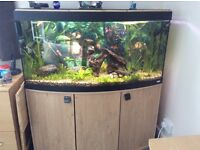 Fluval Vicenza 260 LED Aquarium and Cabinet in Oak