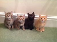 4 really cute and gorgeous kittens - 2 now sold