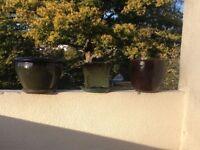 Three glazed terracotta pots