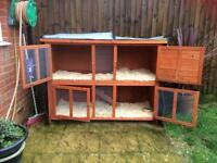 Guinea pigs 1 long head 1 short head and new hutch and cover