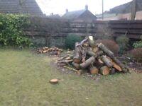 Firewood from 5 felled leylandii