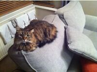 Female log haired cat-gorgeous