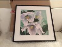 "Brand New Maggie Thompson ""Floral Splendour"" Print"