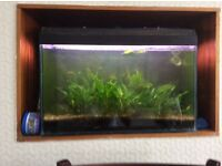 2ft Tropical fish tank with pump and lights