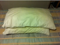 2 bed pillows