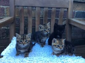 Four beautiful kittens waiting for their forever home