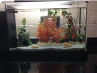 Cold water fish Tank