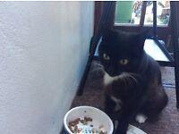 Beautiful 12 Year Old Girl Cat black & white