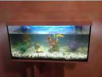 Tropical Fish Tank, fish stand and 11 fish for sale