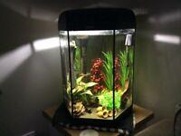 Tropical Fish Tank 60litres
