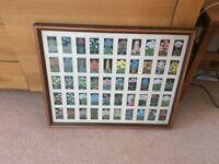 Cigarette cards in frames
