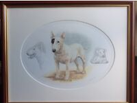 English bull terriers, Nigel Hemming print