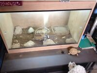 12 year old horse field tortoise male we think, £150 with set up