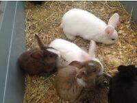 Blue eyed baby rabbits