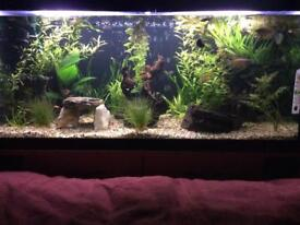 Large fish tanks with lots of accessories