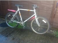 Peugeot ranger mans road bike 19""