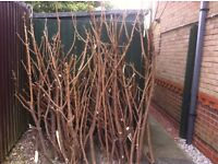 Bundle of garden wood. FREE Suitable as garden supports or fire wood