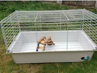 BRAND NEW Guinea pig indoor cage with opening front