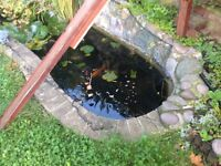 Pond Fish and Plants