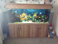 5ft Marine fish tank