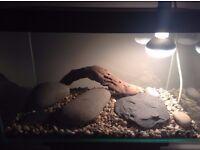 Fish / Reptile tank